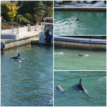 Collage_Fotor dolphins